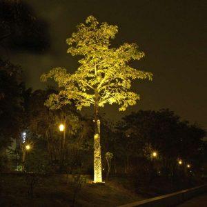 Solar Tree Light 5 Year Warranty